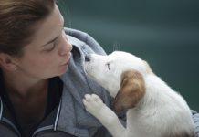Dog, Dog Care Routine